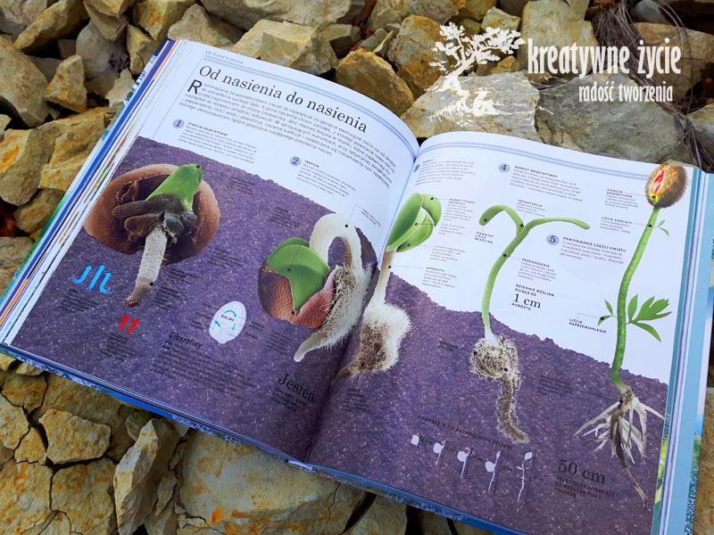 Planeta ziemia rośliny