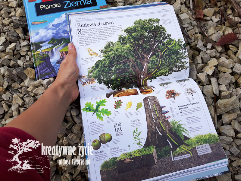Planeta ziemia budowa drzewa