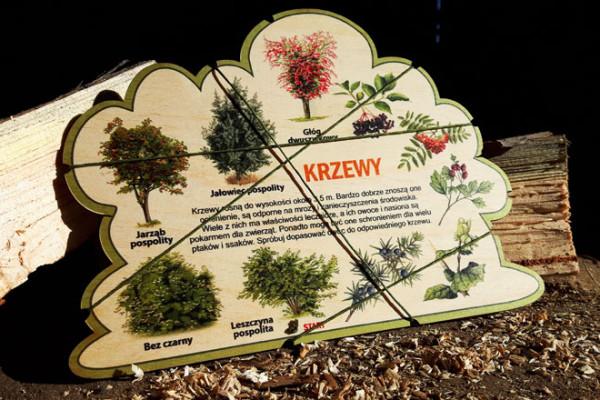 Puls Art Leśne kształty wiedzy krzewy