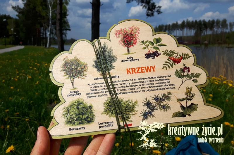 Leśne kształty do nauki krzewy