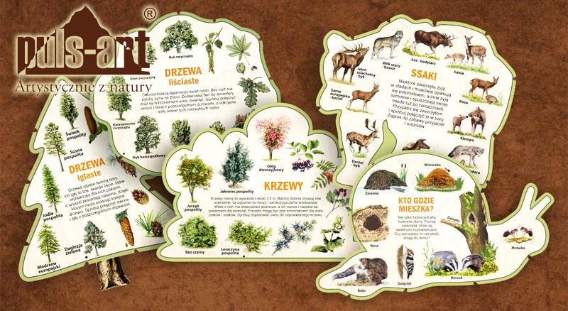 Leśne kształty wiedzy Puls Art