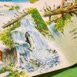 Książeczki kartonowe o zwierzętach od Wilgi
