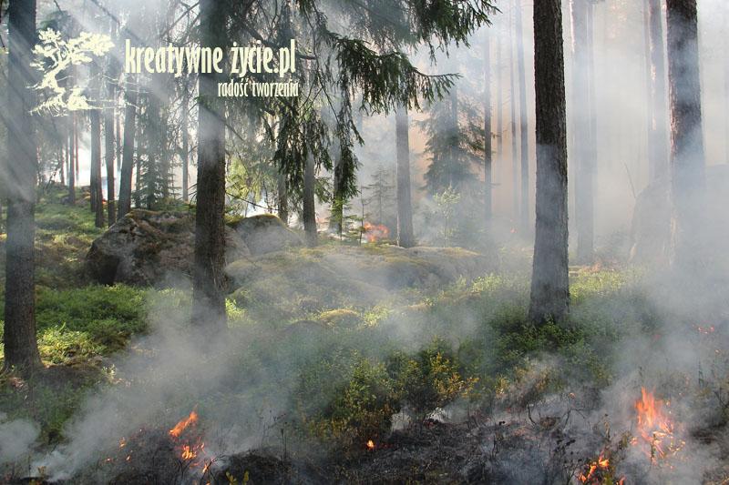 Spalona ziemia