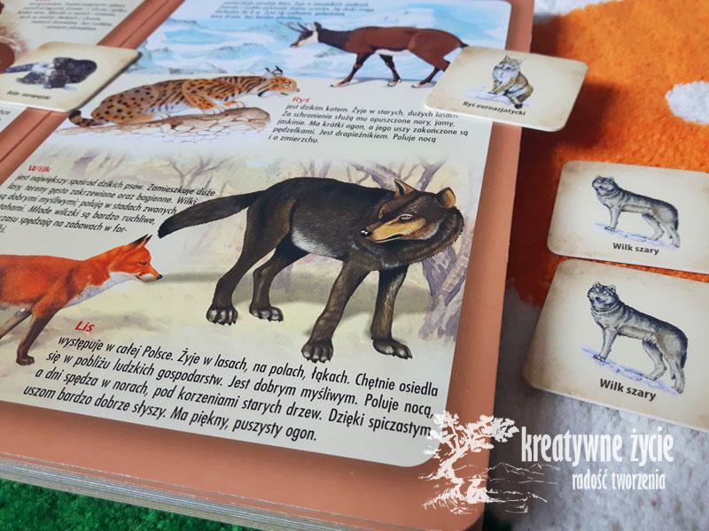 Atlas zwierzat-wilk szary