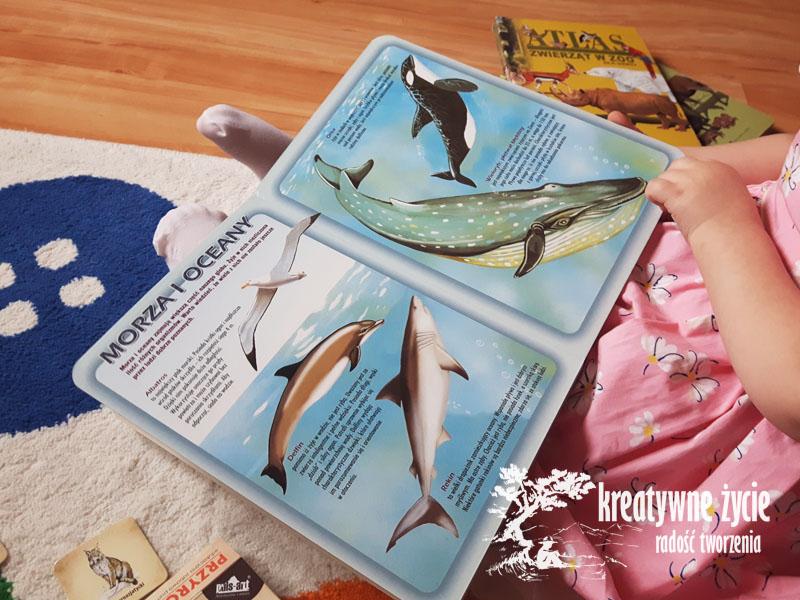 Atlas zwierząt świata - morza i oceany