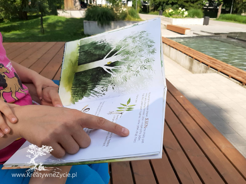 Co rośnie w parku Zielona Sowa