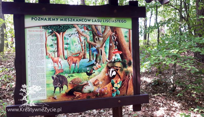 Łeba park dinozaurów