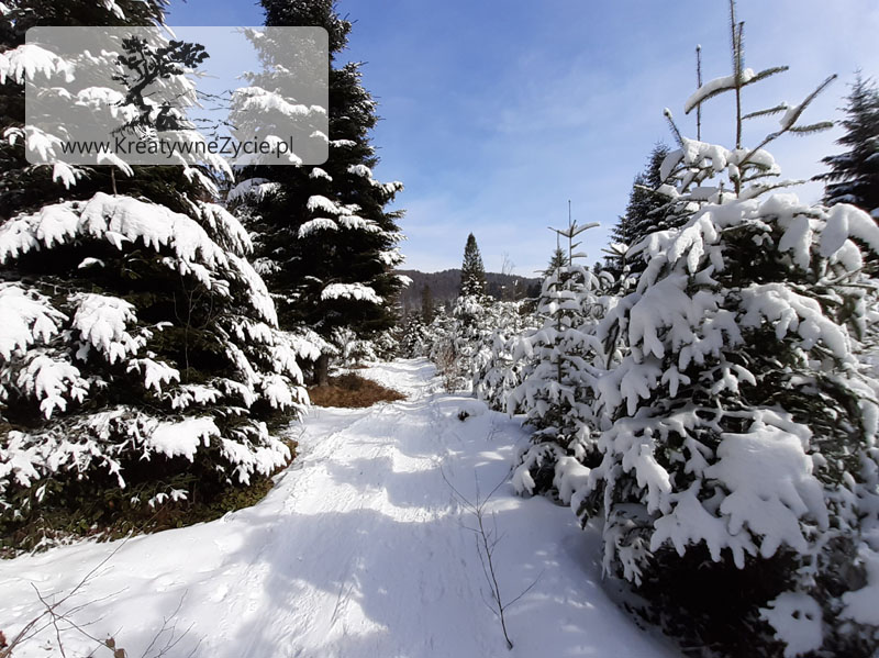 Las Bieszczady