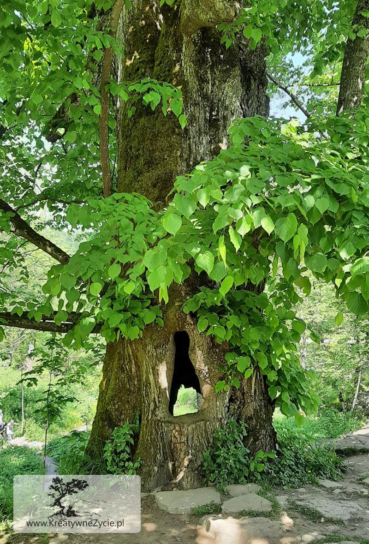 Bieszczady - kościół w lesie